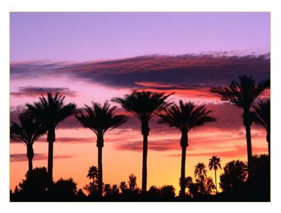 Palm Tree Blog